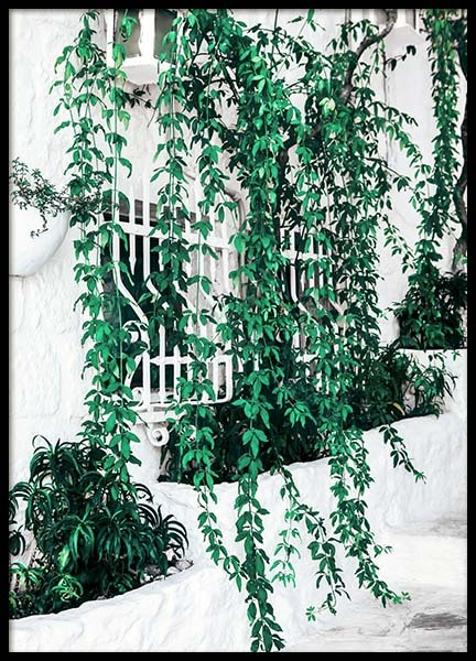 Ivy Window Poster in the group Prints / Photographs at Desenio AB (10140)