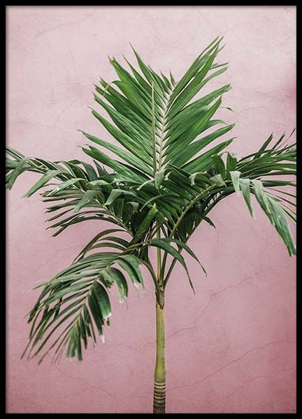 Palm On Pink Poster in the group Prints / Photographs at Desenio AB (10245)
