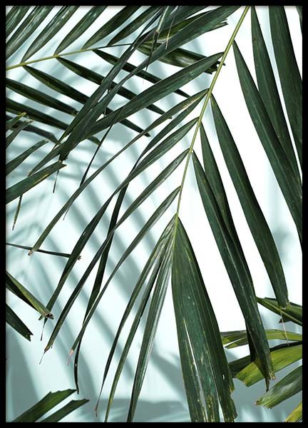 Palm Leaves Shadow No1 Poster in the group Prints / Photographs at Desenio AB (10284)