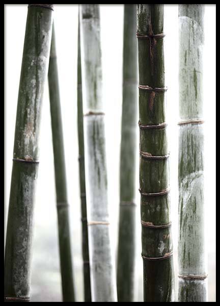 Bamboo No1 Poster in the group Prints / Photographs at Desenio AB (10287)