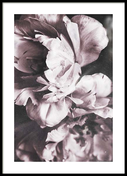 Tulip Dream  Poster in the group Prints / Photographs at Desenio AB (10417)