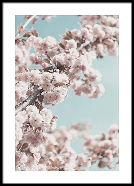 Cherry Blossom No4 Poster in the group Prints / Photographs at Desenio AB (10429)