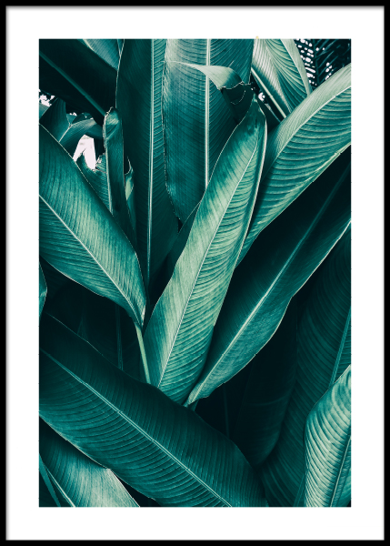 Tropical Leaves No1 Poster in the group Prints / Photographs at Desenio AB (10439)