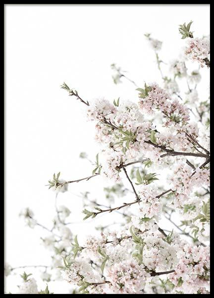 Spring Blossom No3 Poster in the group Prints / Photographs at Desenio AB (10565)