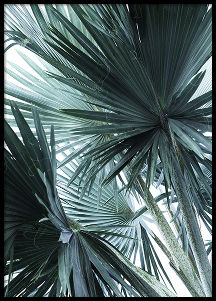 Mint Palms No3 Poster in the group Prints / Photographs at Desenio AB (10964)