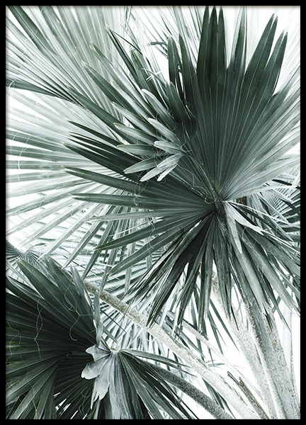Tropical Palm Leaves No2 Poster in the group Prints / Photographs at Desenio AB (10980)