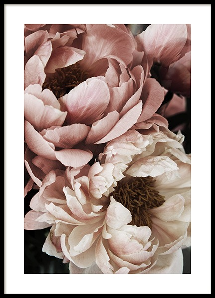 Coral Sunset Peony Poster in the group Prints / Photographs at Desenio AB (10988)