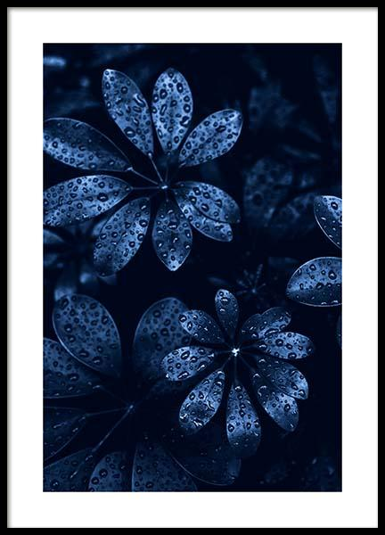 Raindrops on Leaves Poster in the group Prints / Photographs at Desenio AB (11664)