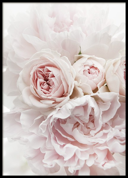 Peonies and Roses Poster in the group Prints / Photographs at Desenio AB (11791)