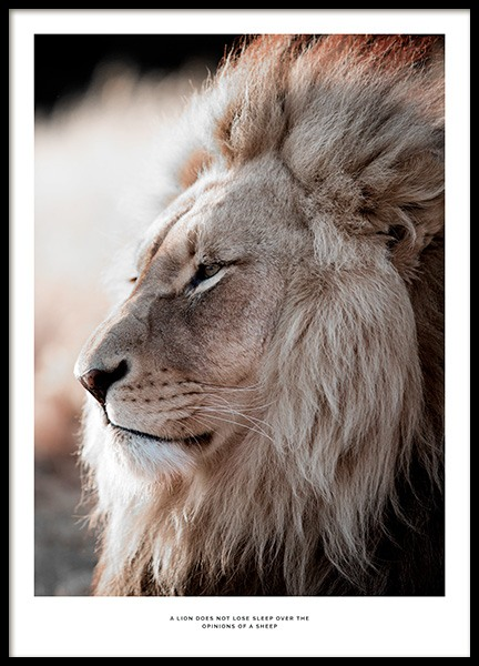 African Lion Poster in the group Prints / Photographs at Desenio AB (11857)