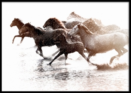 Running Horses Poster in the group Prints / Photographs at Desenio AB (11861)