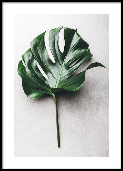 Green Monstera Leaf No1 Poster in the group Prints / Photographs at Desenio AB (12050)