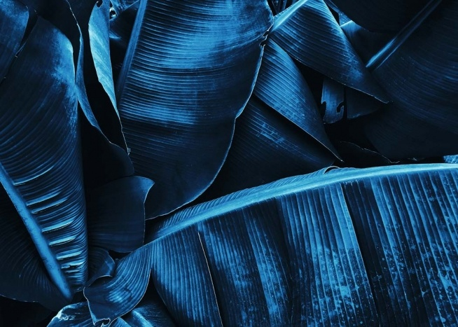 - Photo poster of exotic leaves in indigo.