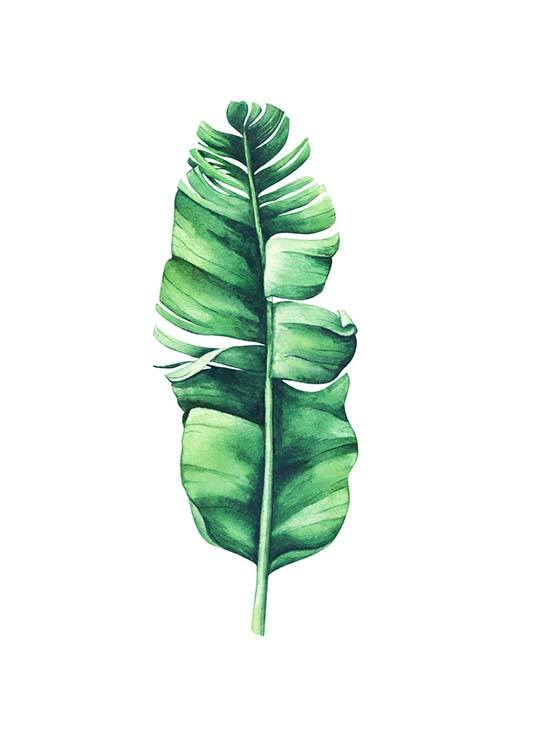 - Dark-green banana leaf with watercolours painted on a white background.