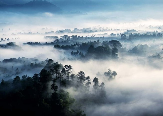 - Mysterious photograph of a rainforest in deep mist