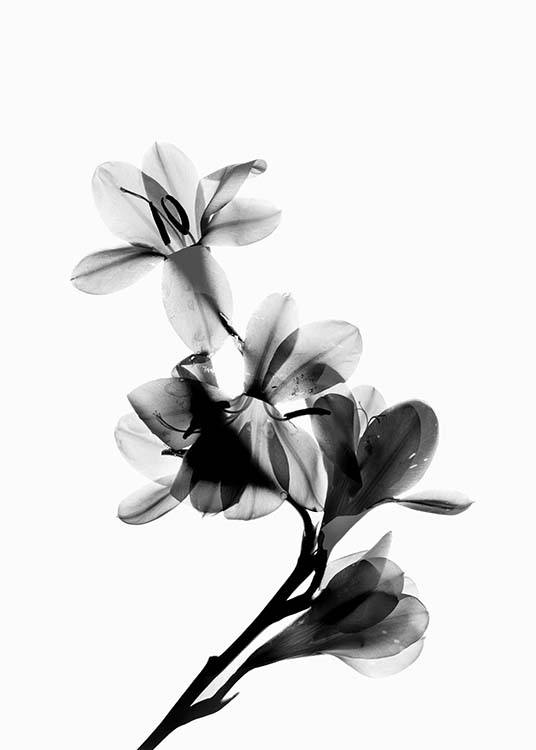- Photo poster of a flower in full bloom in black and white.