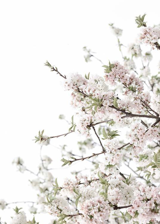 - Refreshing plant poster with a cherry tree in full bloom awakens spring fever in us.