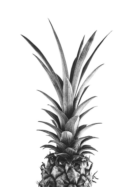– Black and white photograph of the top of a pineapple