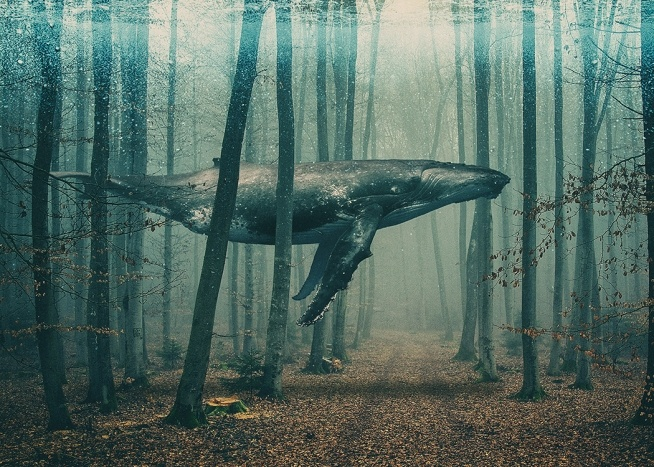 – Art print with a whale in a forest, swimming between trees