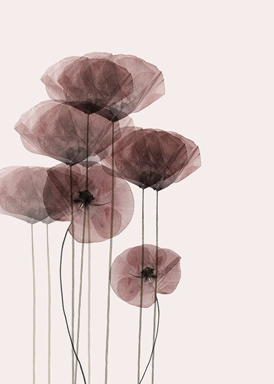 - Stylish drawing of several red poppies on a simple background