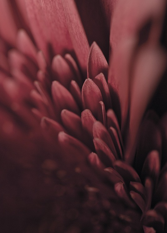 - Beautiful close-up botanical poster of a burgundy lilac flower.