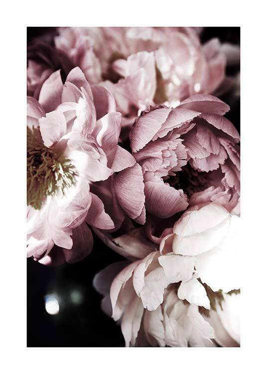 Dreamy Peony No3 Poster / Photographs at Desenio AB (11777)