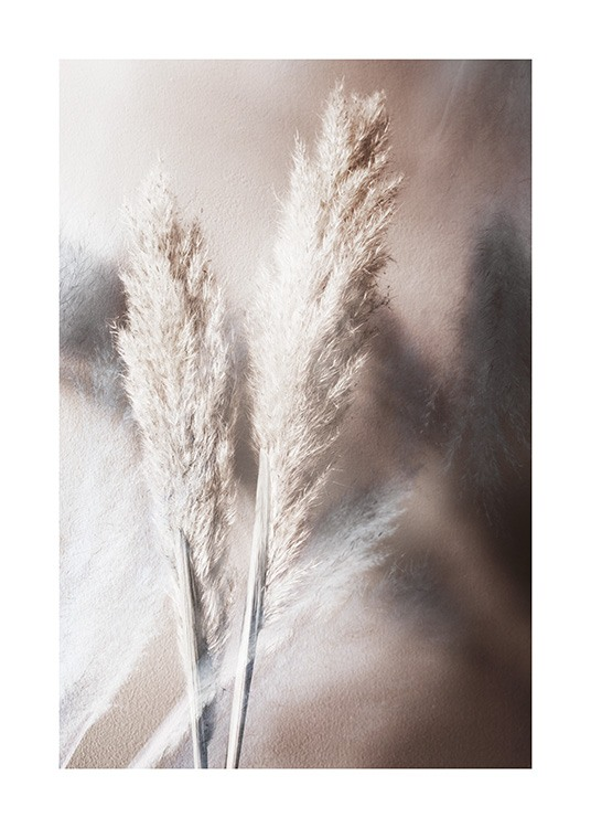 – Photograph of pampas grass in beige on a brown background