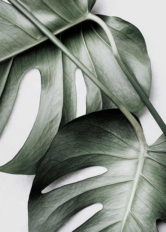 Monstera Pair Poster / Photographs at Desenio AB (12584)