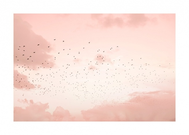 Flock of Birds Poster / Nature at Desenio AB (12602)