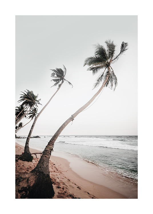 – Photograph of a row of palm trees in the wind on a beach with an ocean in the background
