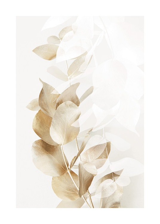 – Photograph of eucalyptus branches in gold and white on a light beige background