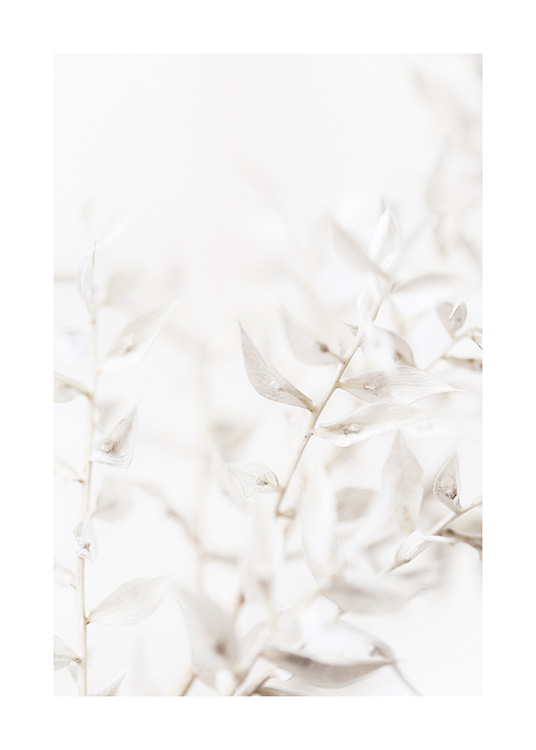 – Photograph with close up of a bundle of white leaves on a light grey background