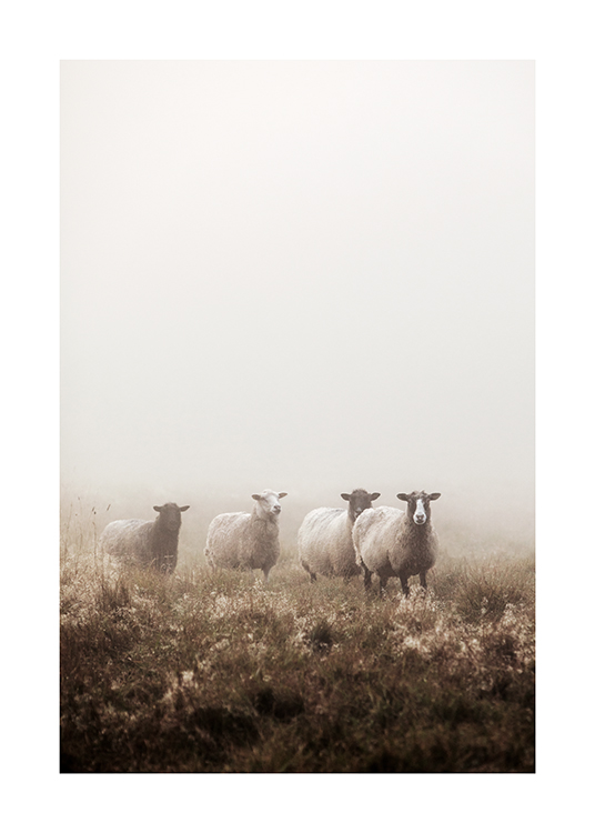 – Photograph of sheep standing together in a grass field, covered by fog
