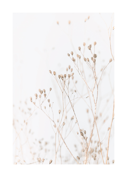– Bundle of small flowers in beige against a background in light grey