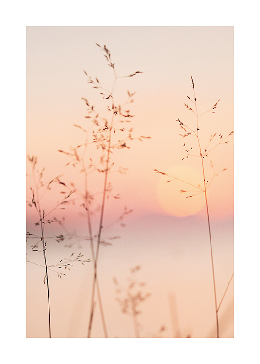 – Photograph of a pastel coloured sky and sun behind thin grass straws
