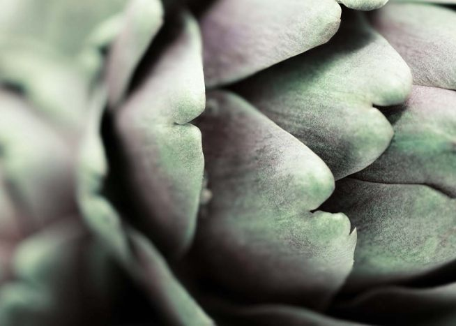 Artichoke Close Up Poster / Kitchen at Desenio AB (3676)